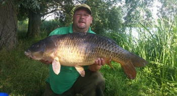LUMPY COMMON